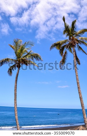 Palm Tree Blowing In The Wind La Palma Canary Islands Spain