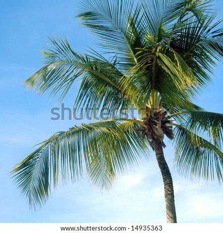 Palm Tree Blue Sky - stock photo