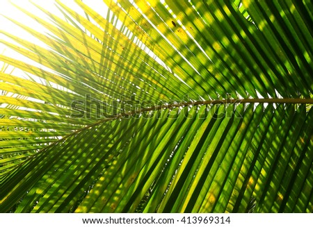 Palm tree branch against the light - stock photo