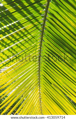 Palm tree branch against the light on the tropical beach