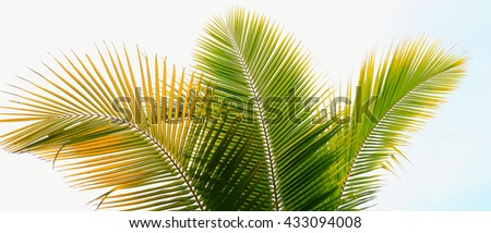 Palm tree branch against the light on the tropical beach - stock photo