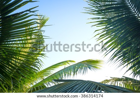 Palm tree branches with blue sky background. Easter Sunday Good Friday Jesus Christ Religious Spring Time Go Green World Environment Day Ecology Maundy Thursday Covenant Great Sheer Mysteries concept. - stock photo