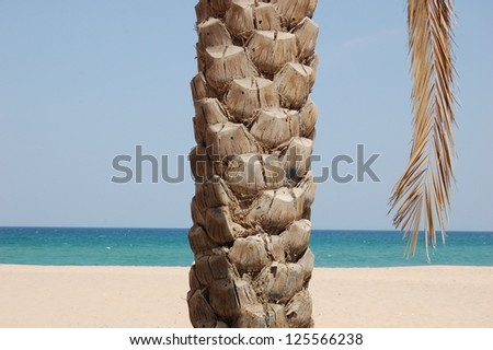 Palm Tree By The Beach and Sea