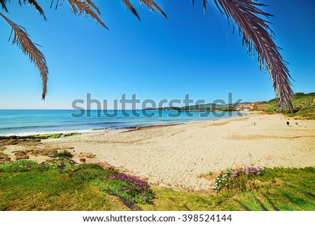 palm tree by the shore in Le Bombarde beach, Sardinia