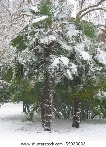 Palm tree covered in snow in Soho Square, London - stock photo