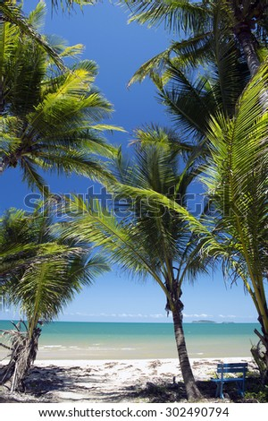 Palm tree,Cowley Beach, Cardwell, Great Barrier Reef, Australia -2 - stock photo