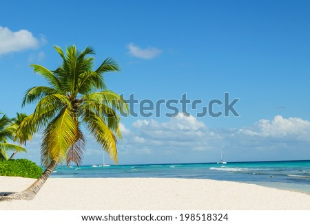 Palm tree entering the ocean on sandy exotic beach - stock photo