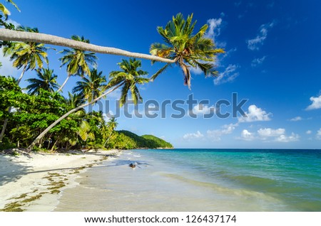Palm tree extending over a beautiful secluded Caribbean beach