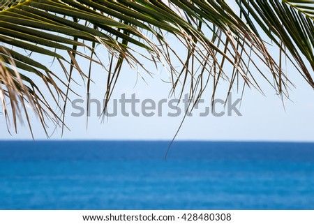 Palm tree foliage  against turquoise caribbean sea water. Tropical summer vacation concept