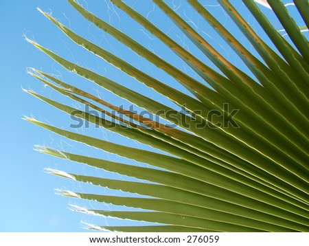 Palm Tree frond against blue sky - stock photo