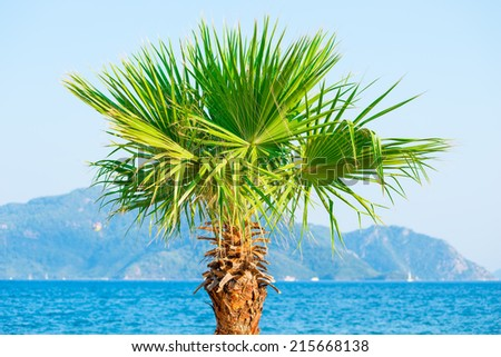 palm tree growing near the sea on the background of mountains - stock photo