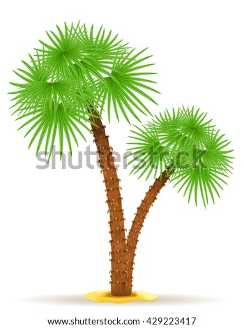 palm tree illustration isolated on white background