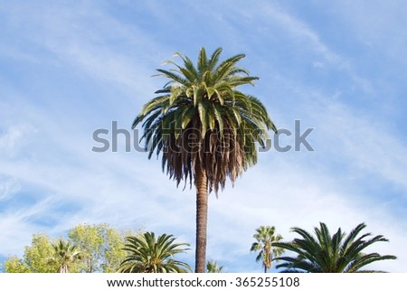 Palm tree in Los Angeles