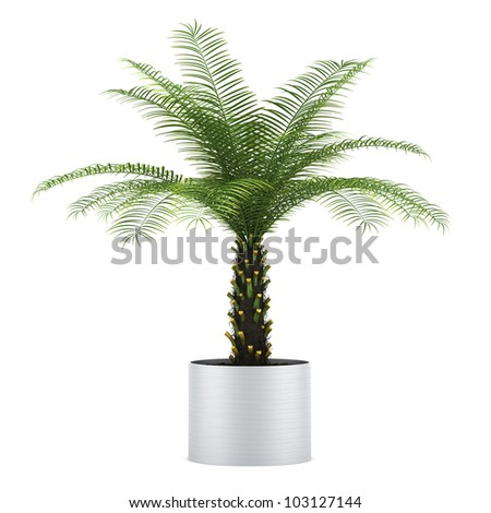 palm tree in pot isolated on white background - stock photo