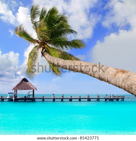 Palm tree in tropical perfect beach at Cancun [Photo Illustration] - stock photo