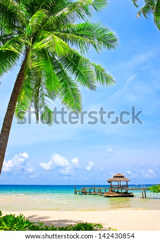 Palm tree in tropical perfect beach at Koh Kood , Thailand - stock photo