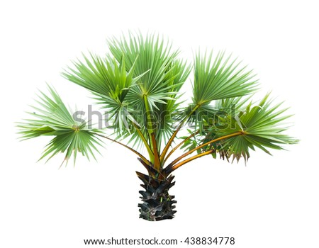palm, tree isolated