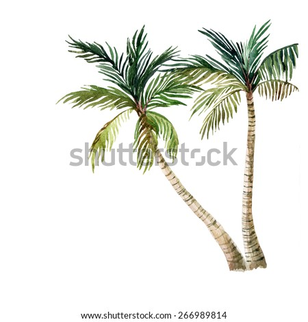 Palm tree isolated on white background. watercolor illustration - stock photo