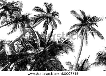 Palm Tree Leaf Background White And Black Texture Silhouette Branch Realistic Tropical Coconut Leave Isolated