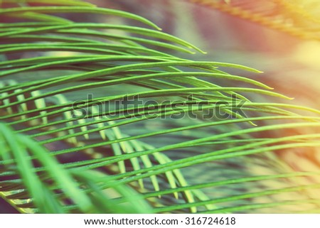 Palm tree leaf close-up as natural background with filters applied - stock photo