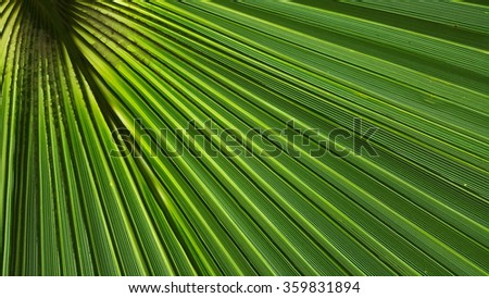 Palm tree leaf in close view against the sun