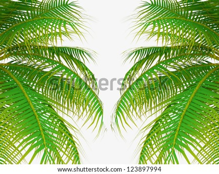 Palm tree leafs on white background - stock photo