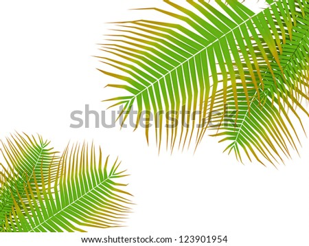 Palm tree leafs on white background
