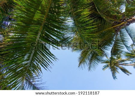 Palm tree leaves against blue sky