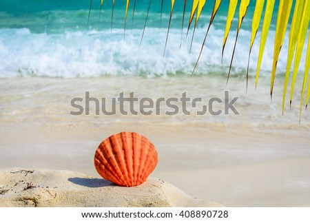 Palm tree leaves and orange seashell on sandy tropical beach. Summer concept. - stock photo