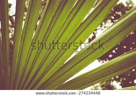 palm tree leaves close up on a greeny blurry garden background - stock photo
