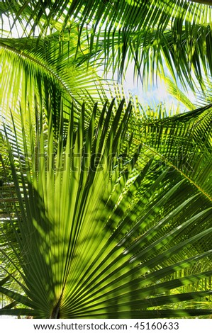 Palm tree leaves in beautiful green shades