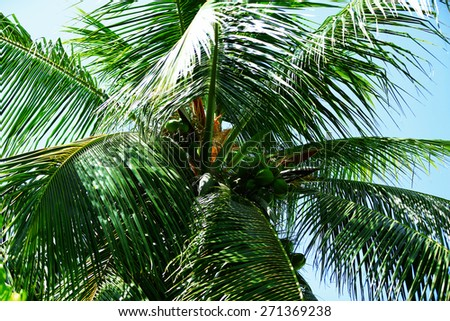 Palm tree leaves in resort