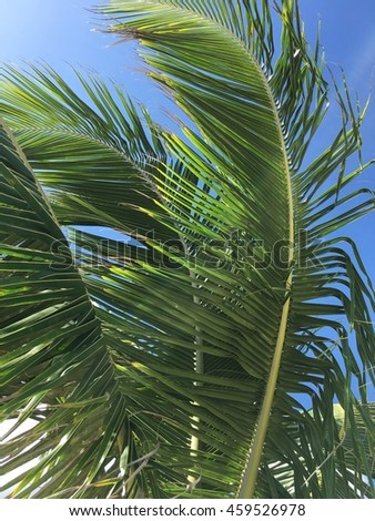 Palm tree leaves in the wind