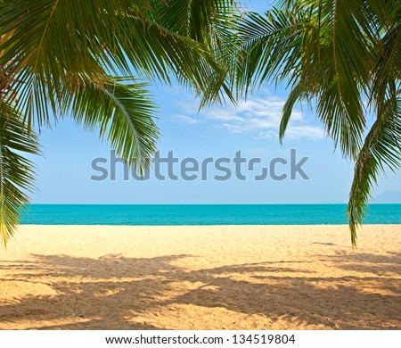 Palm tree leaves over luxury beach - stock photo