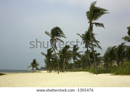 Palm tree lined beach Key West Florida - stock photo