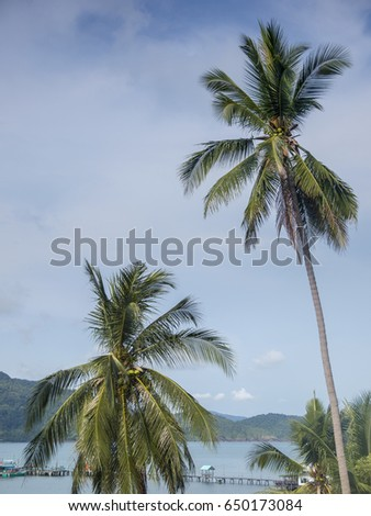 Palm tree near the ocean on the tropical island of Ko Chang in Thailand