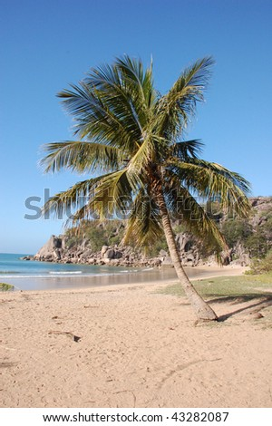 Palm tree on a beach with sand, rocks and ocean at Magnetic Island National Park in Australia - stock photo