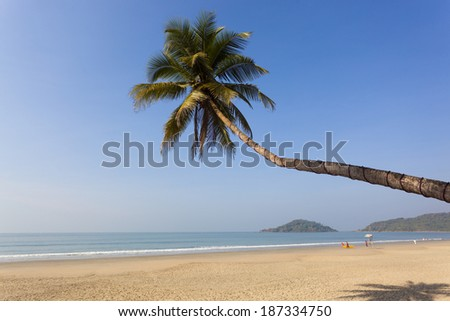 Palm tree on a beach with waves (shot in Caribbean - Cozumel, Cancun, Mexico) - stock photo