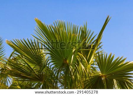 palm tree on a blue sky background - stock photo