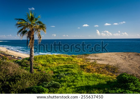 Palm tree on a cliff over the Pacific Ocean in San Clemente, California. - stock photo