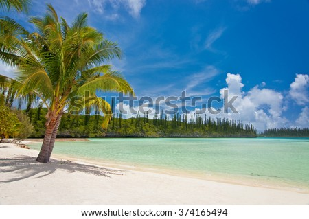 Palm tree on a tropical beach, Isle of Pines, New Caledonia - stock photo