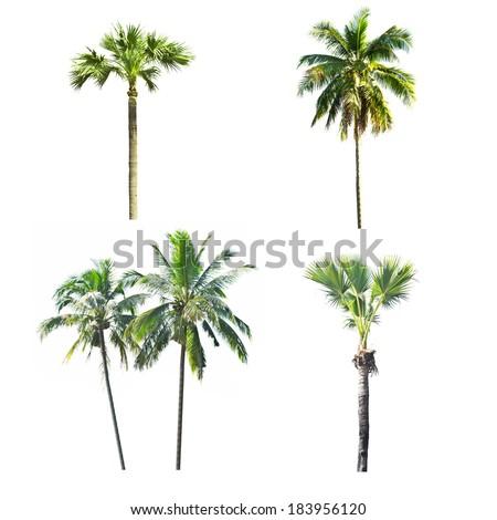 palm tree white - photo #33