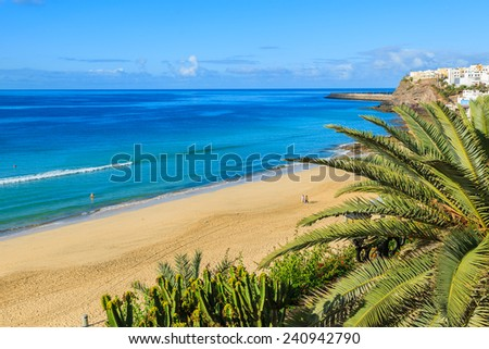 Palm tree on beach in Morro Jable holiday village, Fuerteventura, Canary Islands, Spain - stock photo