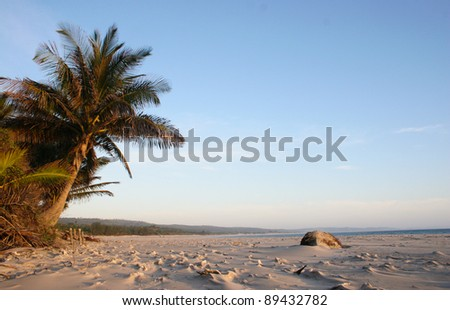 Palm tree on beach in Mozambique - stock photo