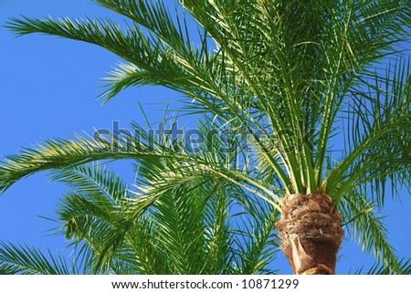 palm tree on blue sky - stock photo