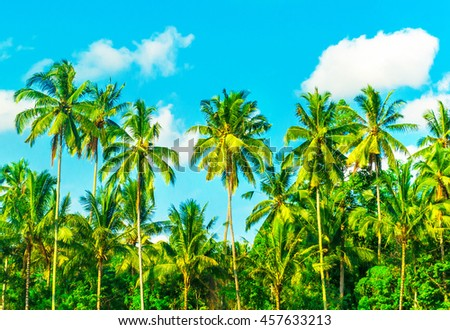 Palm tree on blue sky and white clouds