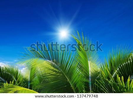 palm tree on blue sky background - stock photo