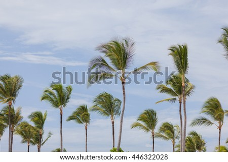 Palm tree on blue sky background. Summer vacations in tropical island.