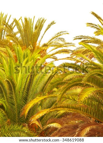 Palm tree on exotic island of volcanic origin Gran Canaria in the Atlantic Ocean, Canary Islands in Spanish archipelago, Spain, Europe - stock photo