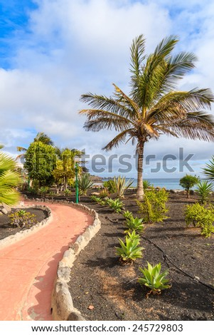 Palm tree on Playa Blanca coastal promenade, Lanzarote, Canary Islands, Spain
